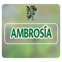 El ángel de tu salud, programa de radio ambrosía, planta medicinal para dolores menstruales, Ambrosia artemisiifolia L.