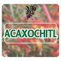 acaxochitl, el ángel de tu salud, plantas medicinales, plantas medicinales para pulmones, herbolaria para vías respiratorias
