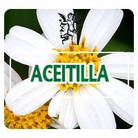 aceitilla, el ángel de tu salud, aceitilla, plantas medicinales para el susto, herbolaria para susto, programa de rodrigo mondragón