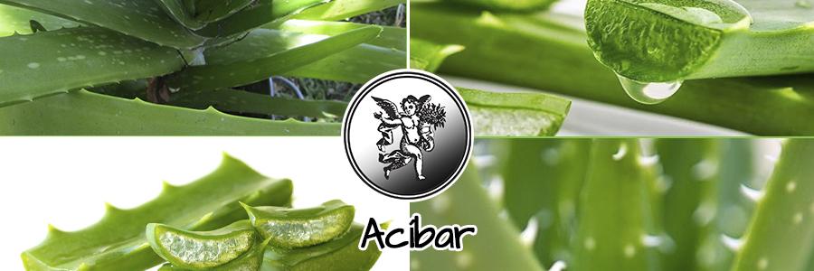 El arbusto del áloe tiene las hojas de forma semejante a las de la cebolla albarran, en las que hay una humedad que se pega a la mano y cuya parte ancha es gruesa, casi redonda e inclinada hacia atrás.