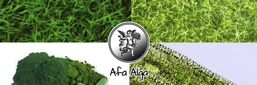 Las algas AFA, pertenecen a un grupo de algas llamadas verdiazules, o verde-azules y se diferencia de otras micro algas de agua dulce, como puede ser la spirulina (espirulina) y la chlorella.