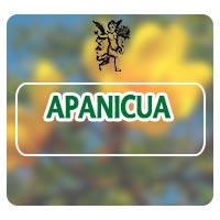 Apanicua, el ángel de tu salud, plantas medicinales, ictericia