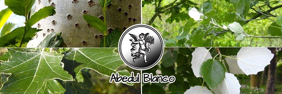 Logo el ángel de tu salud, programa de radio abedul blanco planta medicinal
