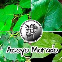 El ángel de tu salud, plantas medicinales, rodrigo mondragón, acoyo morado, hoja santa, programa de radio