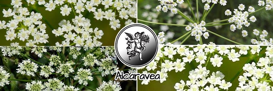 Alcaravea, el ángel de tu salud, programa de radio