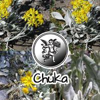 Es una planta medicinal mexicana utilizado para el tratamiento de dolencias renales y que destaca por sus propiedades antisépticas.