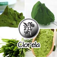 La Chlorella, en su variedad Vulgaris o Pyrenoidosa, es un alga unicelular que se desarrolla en las aguas dulces, perteneciente al reino Protista