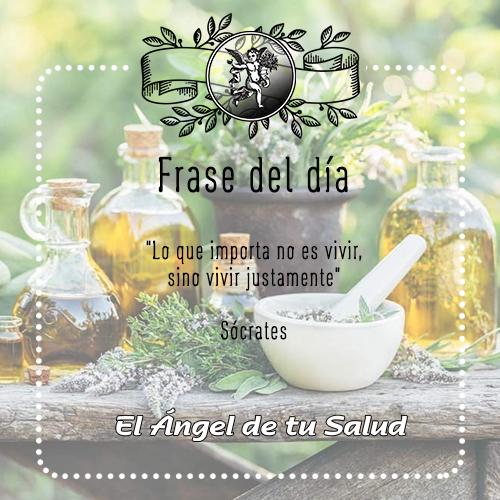 """#FraseDelDia  #HojasRaicesyTallos  """"Lo que importa no es vivir, sino vivir justamente"""" / Sócrates"""