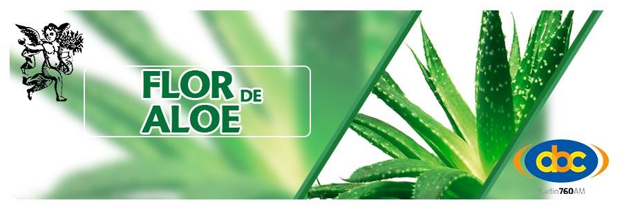 Programa de flor de aloe de el ángel de tu salud, entérate de las propiedades medicinales de la flor de aloe con Rodrigo Mondragón