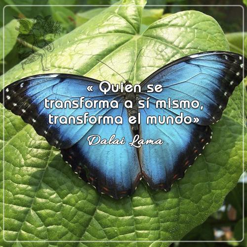 #Frasedeldía « Quien se transforma a sí mismo, transforma el mundo» Dalai Lama