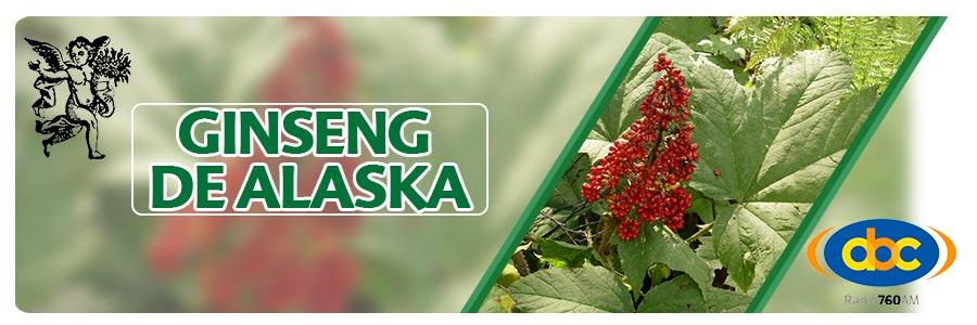 qué es la astenia, astenia primaveral, ginseng de alaska, cambio de clima, plantas medicinales, el ángel de tu salud, herbolaria, rodrigo mondragón, para que sirve el ginseng de alaska, herbolaria para astenia, Oplopanax horridus
