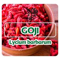 Las bayas de Goji son pequeñas, oblongas y de color rojo anaranjado. Goji se puede comer en forma de bayas frescas o bayas secas.