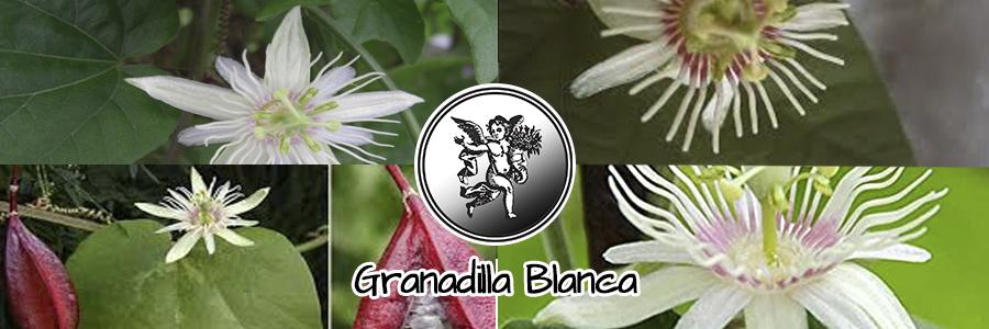 Se afirma que la raíz de la granadilla es un vomitivo poderoso y que a la vez posee propiedades narcóticas muy pronunciadas.