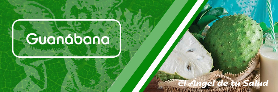 Se considera la guanábana como un agente anti-microbial de ancho espectro contra las infecciones bacterianas y hongos; eficaz para combatir desórdenes nerviosos, parásitos y gusanos; actúa como reguladora de la tensión arterial alta y es antidepresiva.