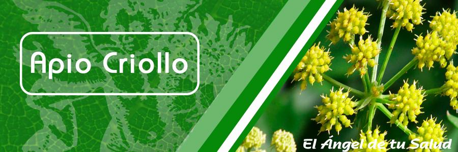 Utilizado para aumentar la cantidad de orina logrando un enrojecimiento del tracto urinario como adyuvante en malestares urinarios menores.