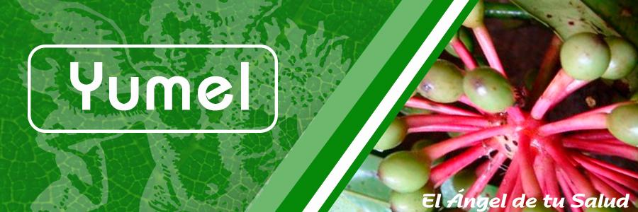 Es una planta originaria de la península de Yucatán, se utiliza la corteza, es auxiliar en control de colesterol y triglicéridos, limpia arterias obstruidas, ), sirve para eliminar bolas de grasa, cálculos biliares. Al ser un potente quemador de grasa ayuda como auxiliar en obesidad, nuestros clientes la han bautizado como la