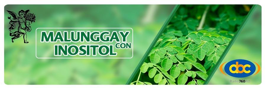 Malunggay con inositol, plantas medicinales para diabetes, herbolaria para diabetes, recetas herbolarias para diabetes, Moringa oleifera, el ángel de tu salud