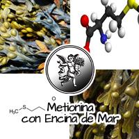 La metionina pertenece también a un grupo de compuestos llamados lipotrópicos, o sustancias químicas que ayudan al hígado a procesar las grasas (lípidos). Otras sustancias de este grupo son la colina, el inositol y la betaína.