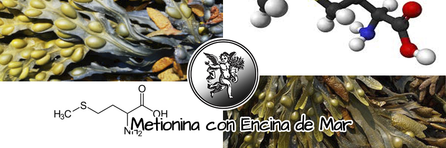 Tiene propiedades anticelulíticas y corrige problemas de obesidad, gracias a sus principios activos.