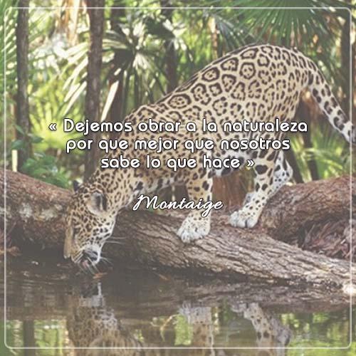 #FraseDelDía   « Dejemos obrar a la naturaleza por que mejor que nosotros sabe lo que hace »  Montaige