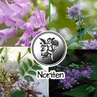 Otras aplicaciones medicinales que se le da a esta planta son para cuidados postparto y en niños asustados