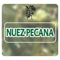 Nuez pecana, el ángel de tu salud, Rodrigo mondragón, herbolaria para sistema inmune