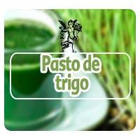Pasto de trigo, el ángel de tu salud, programa de radio pasto de trigo para mejorar la alimentación