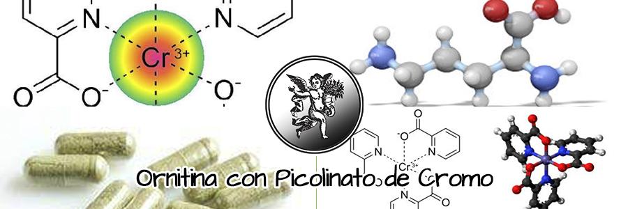 La ornitina es un aminoácido dibásico, sintetizado en el citosol como producto del glutamato.