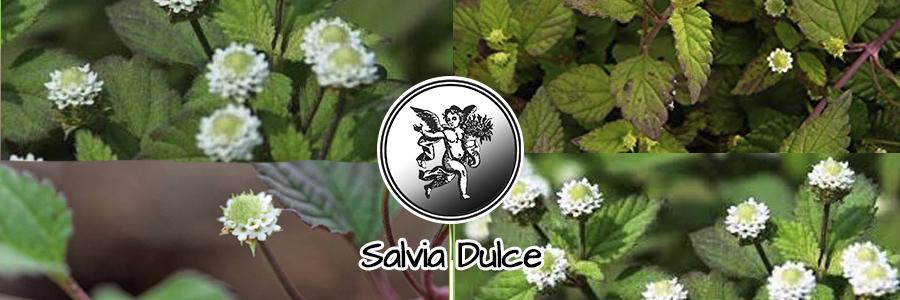 Se usa para tratar resfriados, sirve como un sedante natural, cuando se toma como té o infusión controla la ansiedad y calma los nervios.