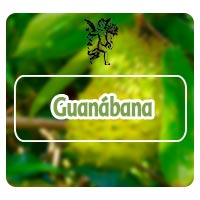 guanabana tema de radio de rodrigo mondragón, planta guanabana, logo el ángel de tu salud