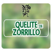 El ángel de tu salud, quelite de zorrillo, parásitos intestinales, Rodrigo Mondragón, lombrices intestinales