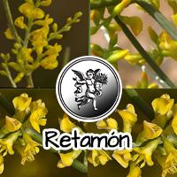 Se obtienen muy buenos resultados  usándola en el tratamiento del reumatismo, ciática, gota y enfermedades similares. Es un buen normalizante de las funciones genitales femeninas.