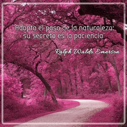 Adopta el paso de la naturaleza: su secreto es la paciencia. Ralph Waldo Emerson.
