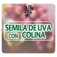 herbolaria, plantas medicinales, el ángel de tu salud, rodrigo mondragón, semilla de uva, colina, insuficiencia venosa,