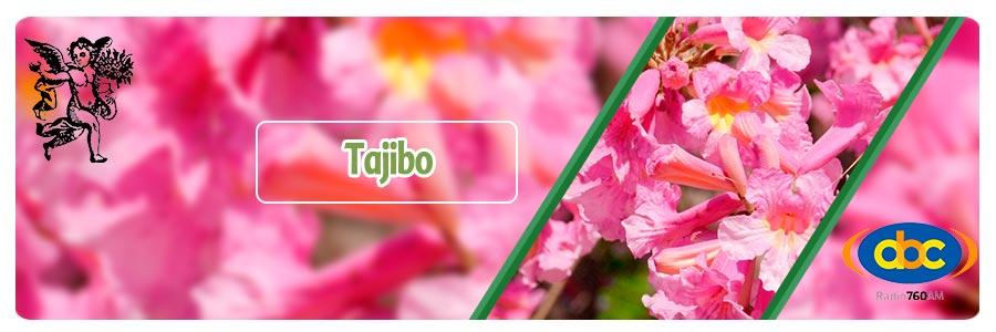 Tajibo, el ángel de  tu salud, programa de Rodrigo mondragón