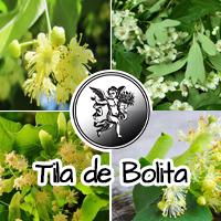 El té de tila, como popularmente se le conoce a esta especie, es particularmente empleado en la zona centro del país para calmar los nervios