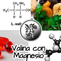 La valina es un aminoácido esencial que sólo podemos aportar a nuestro organismo a través de la dieta, optando siempre por aquellos alimentos que sean más ricos en este nutriente.