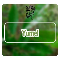 El ángel de tu salud, plantas medicinales, rodrigo mondragón, PROGRAMA DE RADIO DE GRASA ABDOMINAL