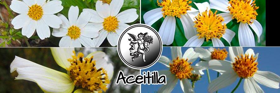 Logo el ángel de tu salud, programa de radio rodrigo mondragón, planta medicinal aceitilla