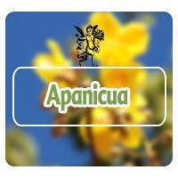 El ángel de tu salud, Herbolaria, apanicua, plantas medicinales para pulmones