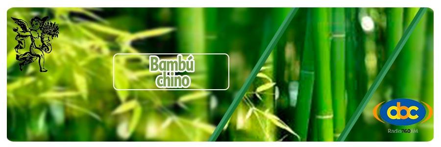 el ángel de tu salud, bambu chino, rodrigo mondragón, programa a de radio para huesos,