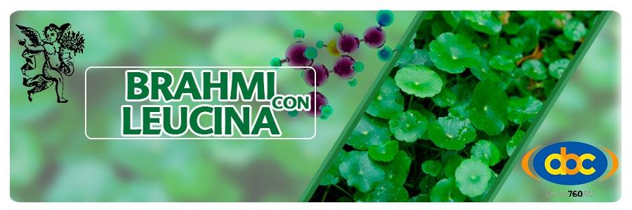 Brahami con leucina, plantas medicinales para la memoria, el ángel de tu salud, Rodrigo Mondragón, Alzheimer