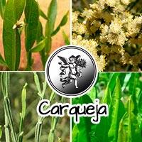El ángel de tu salud, plantas medicinales, carqueja con vitamina b12