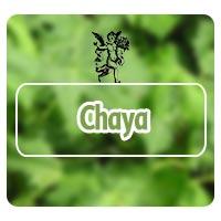 Chaya, cólico nefrítico, plantas medicinales para cólico nefrítico, herbolaria, naturismo, el ángel de tu salud