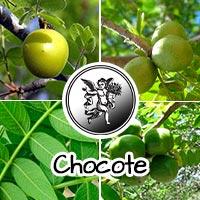 Chocote, el ángel de tu salud, plantas medicinales, Programa de radio con rodrigo mondragón,