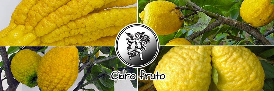 Cidro fruto, el ángel de tu salud, programa de radio rodrigo mondragón,