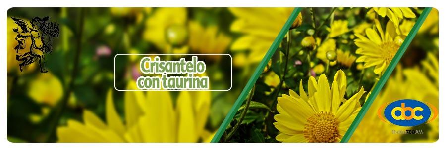 crisantelo con taurina, foro de planta medicinales, el ángel de tu salud, programa de rodrigo mondragón