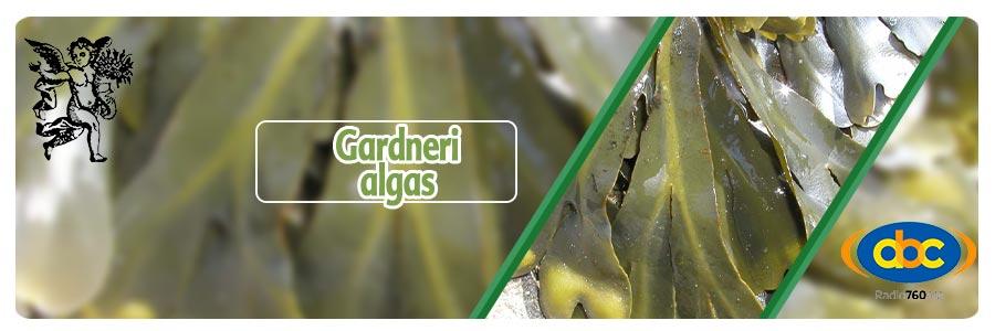Plantas medicinales, gardneri, el ángel de tu salud, programa de rodrigo mondragón