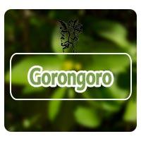 el ángel de tu salud, rodrigo mondragón, para que sirve el gorongoro, plantas medicinales para trombosis,