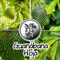 el ángel de tu salud, guanabana hojas, programa de radio